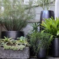 Для цветов и растений